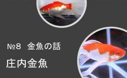 【金魚の話】